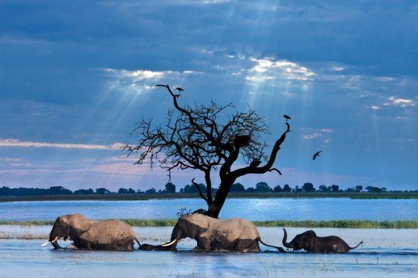 afrique-elephants